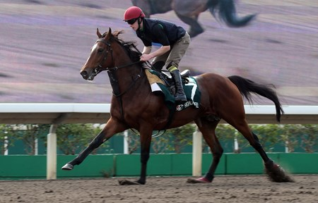 Highland Reel - Trackwork, Hong Kong, December 5, 2017
