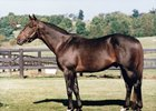 Service Stripe at Crestwood Farm, where he began his stud career