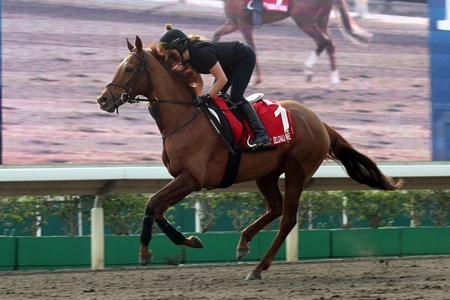 Blond Me - Trackwork, Hong Kong, December 5, 2017