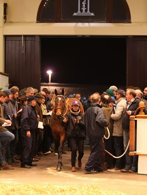 Marsha enters the sales ring during Tattersalls December mare sale Dec. 5