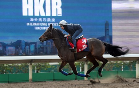 Garlingari - Trackwork, Hong Kong, December 5, 2017