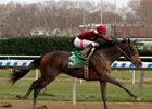 Catholic Boy wins the Remsen Stakes at Aqueduct