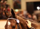 Marsha sold for a record-setting 6 million guineas Dec. 5 during the Tattersalls December mares sale
