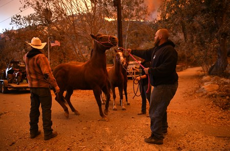 The Thomas Fire in Ventura County, Horses are evacuated.