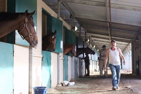 Chrb Reports San Luis Rey Horses Are Accounted For
