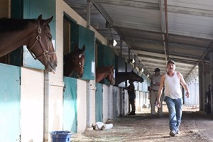 A shedrow of evacuated horses stabled at Del Mar after the devastating fire at San Luis Rey Training Center