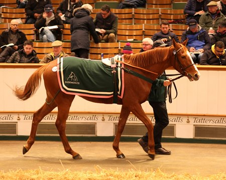 Presiding Officer, consigned as Lot 2147 by Juddmonte, was purchased by James Delahooke Dec. 6