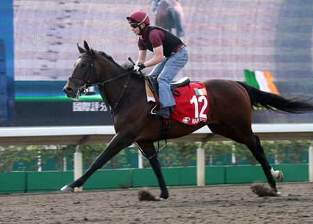War Decree  - Trackwork, Hong Kong, December 5, 2017