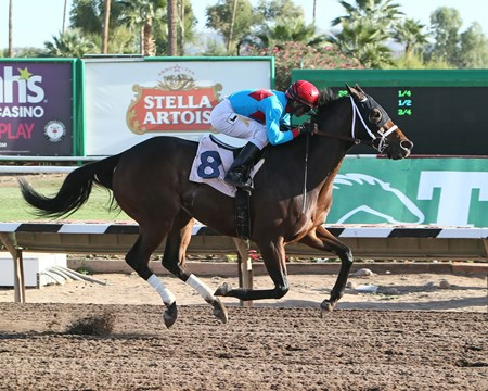 Shrewd Move wins the 2017 Cactus Wren Stakes