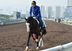 Talismanic on the track Dec. 9 at Sha Tin