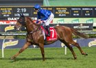 Big Blue sold for AU$102,000 to Maher Bloodstock at the William Inglis & Son December Thoroughbred sale