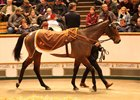 Marsha strolls through the ring at Tattersalls en route to smashing the European auction record