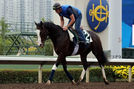 Breeders' Cup Turf winner Talismanic headlines the field for the Hong Kong Vase