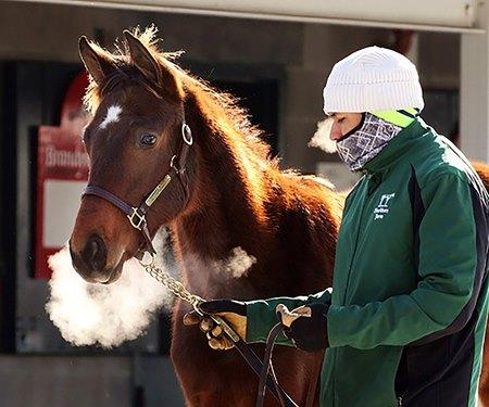 1 582 Horses Cataloged For Keeneland January Sale Bloodhorse