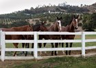 Evacuated horses from San Luis Rey Training Center are cared for at nearby Trifecta Equine Athletic Center