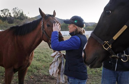 Annabelle Weller-Poly comforts a displaced horse at Trifecta Equine Athletic Center