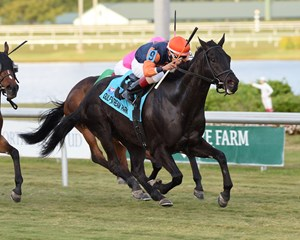 Shakhimat takes over en route to victory in the Tropical Turf Stakes at Gulfstream Park