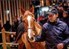 Haggle topped Arqana's December sale when she brought €1.3 million from Wertheimer et Frère's Pierre-Yves Bureau