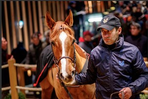 Haggle, consigned as Lot 174, topped the sale when bringing €1.3 million