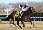 My Boy Tate wins the Say Florida Sandy Stakes at Aqueduct Racetrack