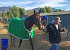 Bolt d'Oro cooling out after his morning work Jan. 27 at Santa Anita Park