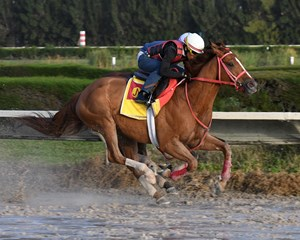 War Story, seen here training at Gulfstream Park West, has earned more than $1.5 million in his career