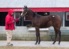 This War Front colt consigned as Hip 763 by Eaton Sales is the only yearling by his sire in the sale