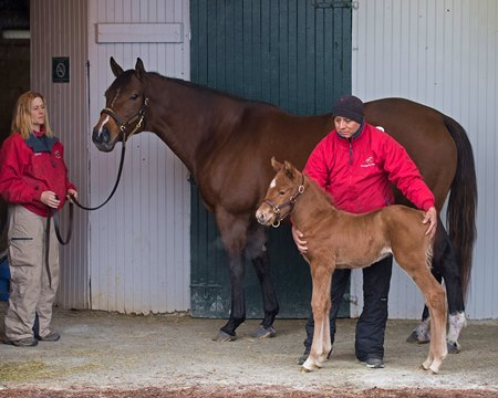 Moonshine Bertie and her Speightster filly at the Brandywine Farm consignment at Keeneland