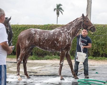 Gun Runner - Gulfstream Park - January 21, 2018