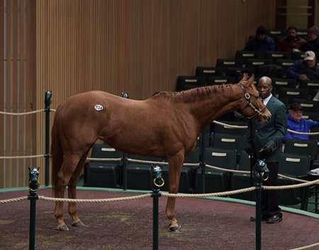 Hip 334, Bellavais, brought $485,000 on the opening session of the Keeneland January sale