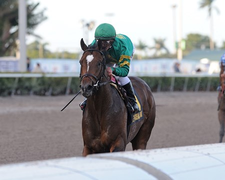 Mask wins the 2018 Mucho Macho Man Stakes