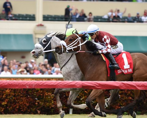 Galleon Mast (outside) gets his head down over Our Way to win the Sunshine Millions Turf Stakes at Gulfstream Park