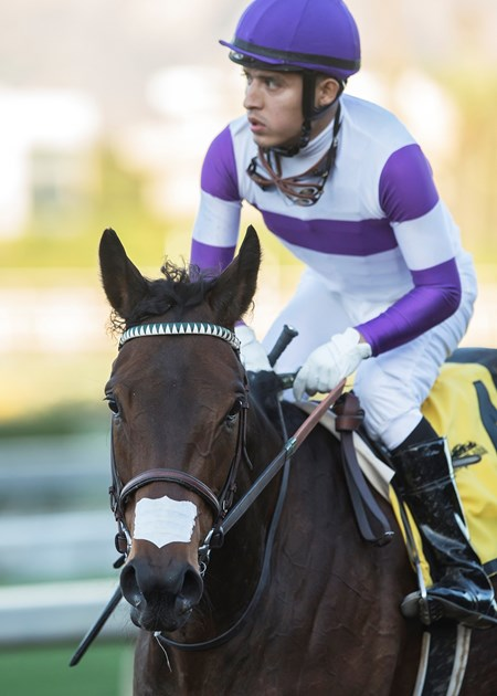 Jockey Mario Gutierrez guides Mopotism to the winner's circle after their victory in the G2, $200,000 La Canada Stakes, Saturday, January 13, 2018 at Santa Anita Park, Arcadia CA.