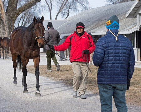 Hip 781A Mrs McDougal at Eaton Sales Scenes and people at Keeneland January Sales 2018. Ky. Jan. 7, 2018  in , KY.