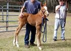 Jess's Dream's first reported foal, a colt out of Redbud Road