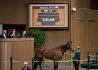 Majestic Quality sells for $350,000