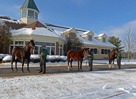 l-r, Mineshaft, A.P. Indy, Honor Code
