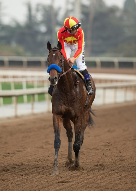 Jockey Mike Smith guides McKinzie to the winner's circle after their victory in the G3, $100,000 Sham Stakes, Saturday, January 6, 2018 at Santa Anita Park, Arcadia CA.
