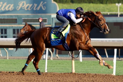 Collected Breezes At Santa Anita For Pegasus Bloodhorse