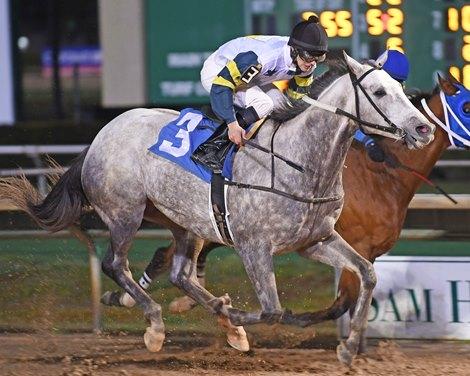 Mav Master Is 50th Stakes Winner For Mizzen Mast Bloodhorse