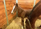 A filly born Jan. 28 is the first foal for multiple stakes winner Texas Bling