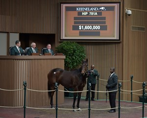 Mrs McDougal brings $1.6 million during the Keeneland January horses of all ages sale