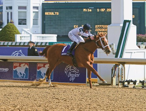 Champion Dreaming Of Anna Dies At 14 Bloodhorse