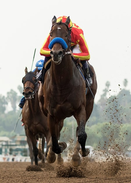 McKinzie and jockey Mike Smith win the G3, $100,000 Sham Stakes, Saturday, January 6, 2018 at Santa Anita Park, Arcadia CA.