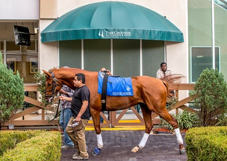 1/11/2018 Gun Runner schooled in the paddock at the Fair Grounds Race Course in New Orleans