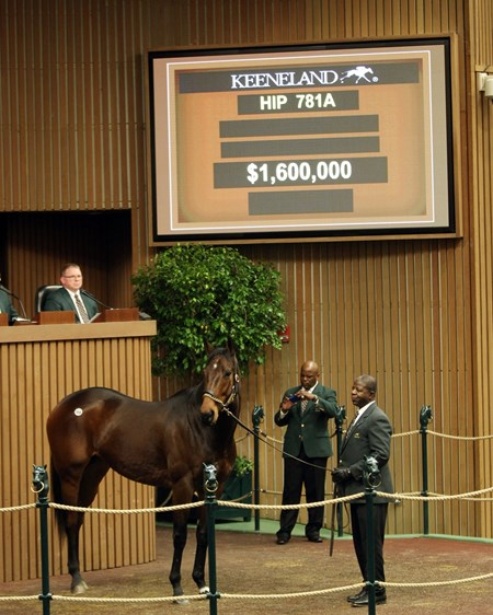 Hip 781 A, Mrs McDougal, 2018 Keeneland January Sale