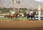 Faversham (yellow cap) closes from far back in the stretch to finish second to Violent Ridge at Santa Anita Park Jan. 15