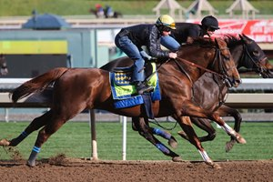 Collected works outside of stablemate Power Cat Jan. 21 at Santa Anita