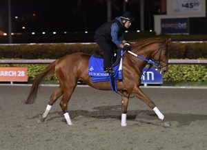 Gun Runner stretches his legs at Gulfstream Park