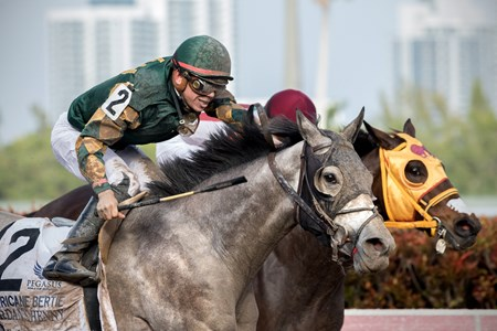 Jordan's Henny wins The Hurricane Bertie Stakes at Gulfstream on January 27th, 2018, jockey Tyler Gaffalione up